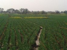 2 قيراط ارض زراعية للبيع في طنطا