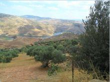ارض للبيع طريق جرش عمان مطلة على سد الملك طلال -  المجدل